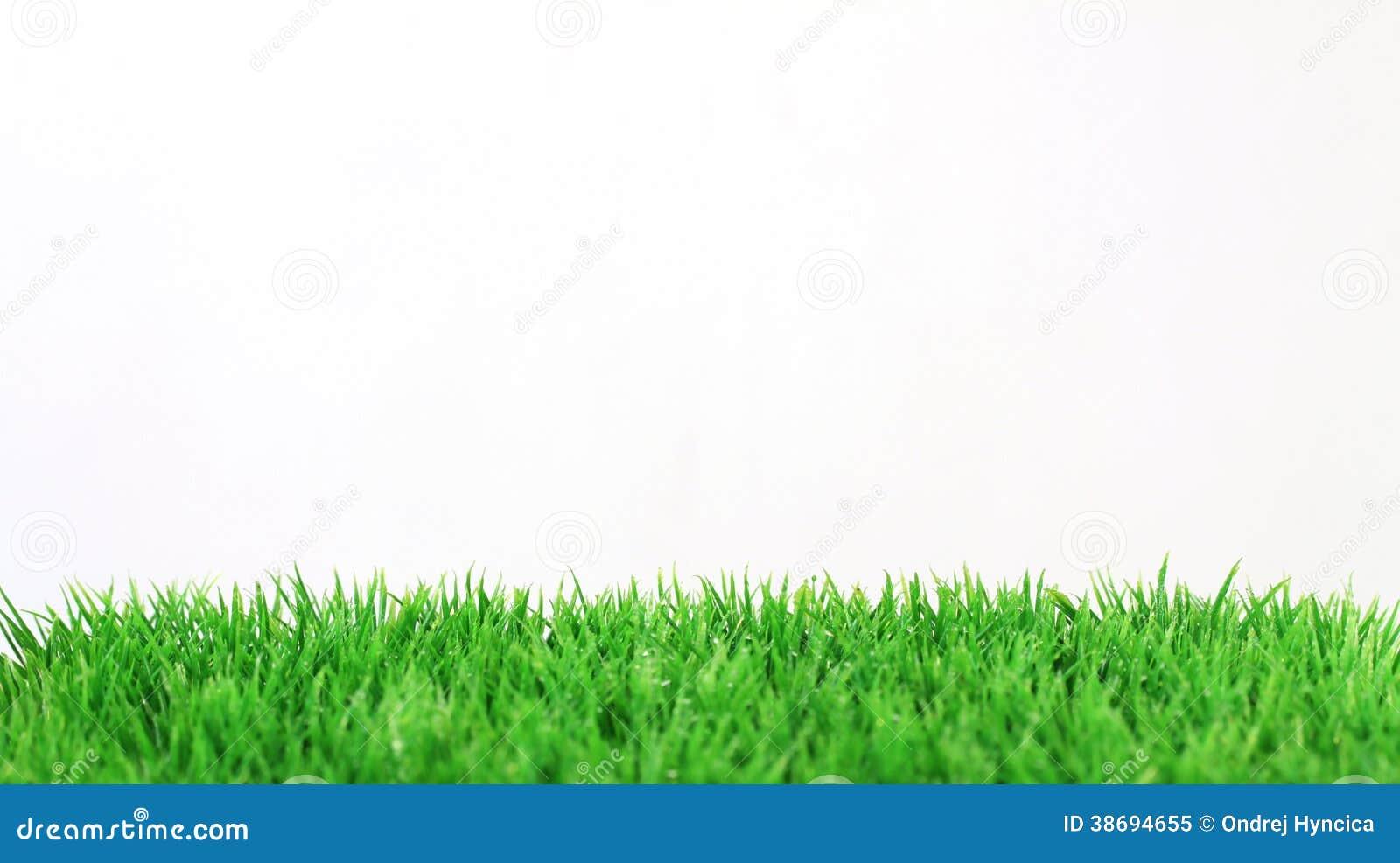 Fondo del vector de la hierba verde - Descargue