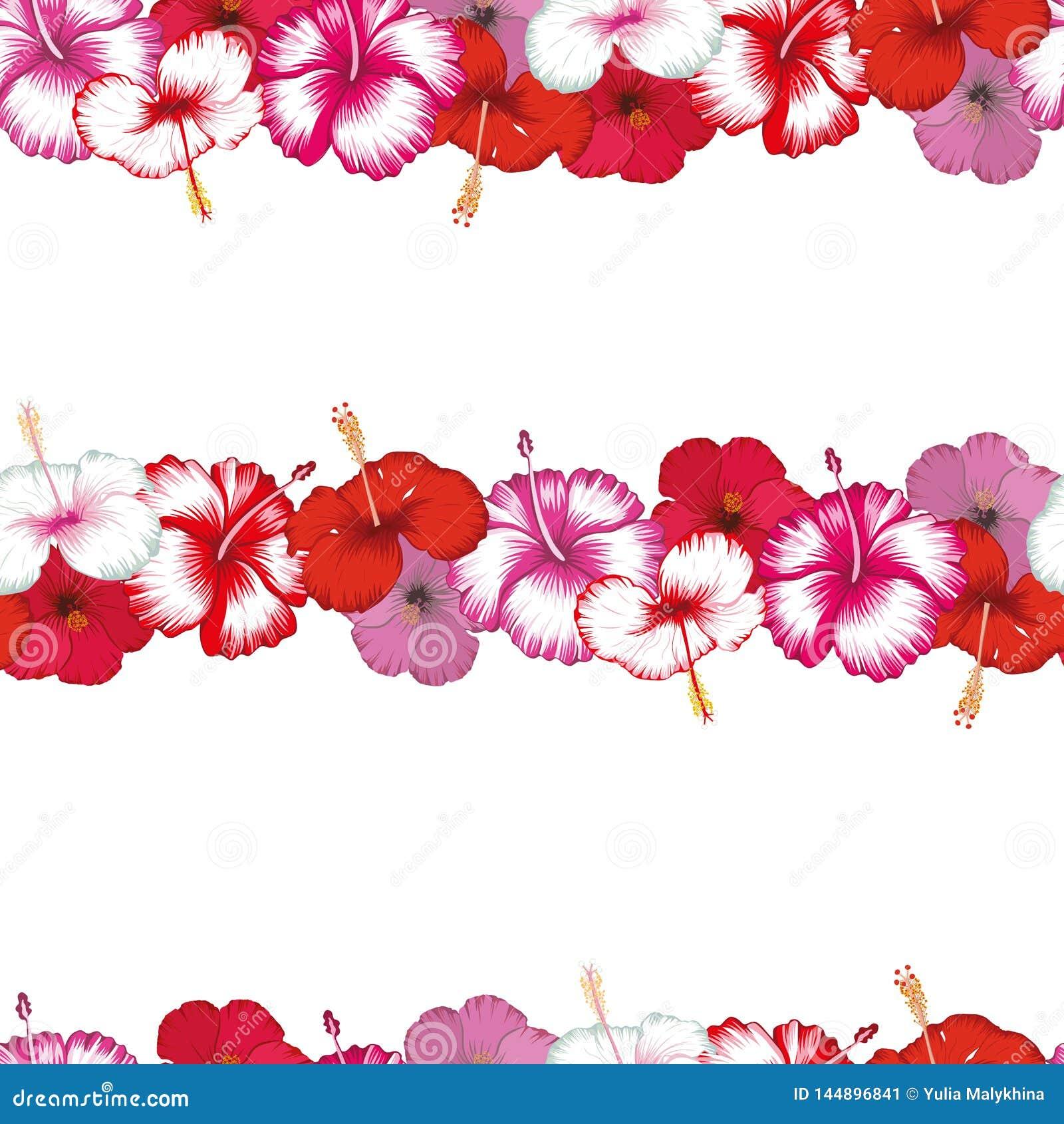 Rayas ex?ticas de los hibiscos de las flores blancos