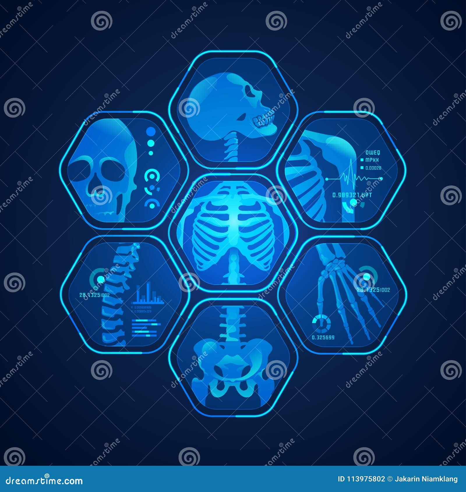 Rayo del esqueleto x ilustración del vector. Ilustración de humano ...