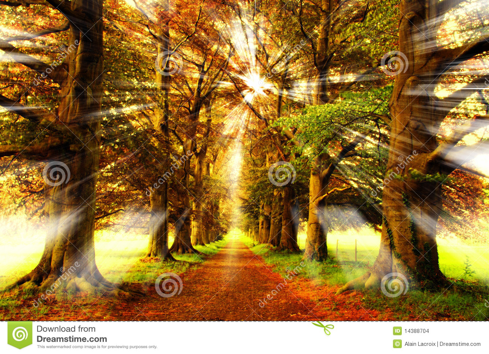 Rayons de forêt