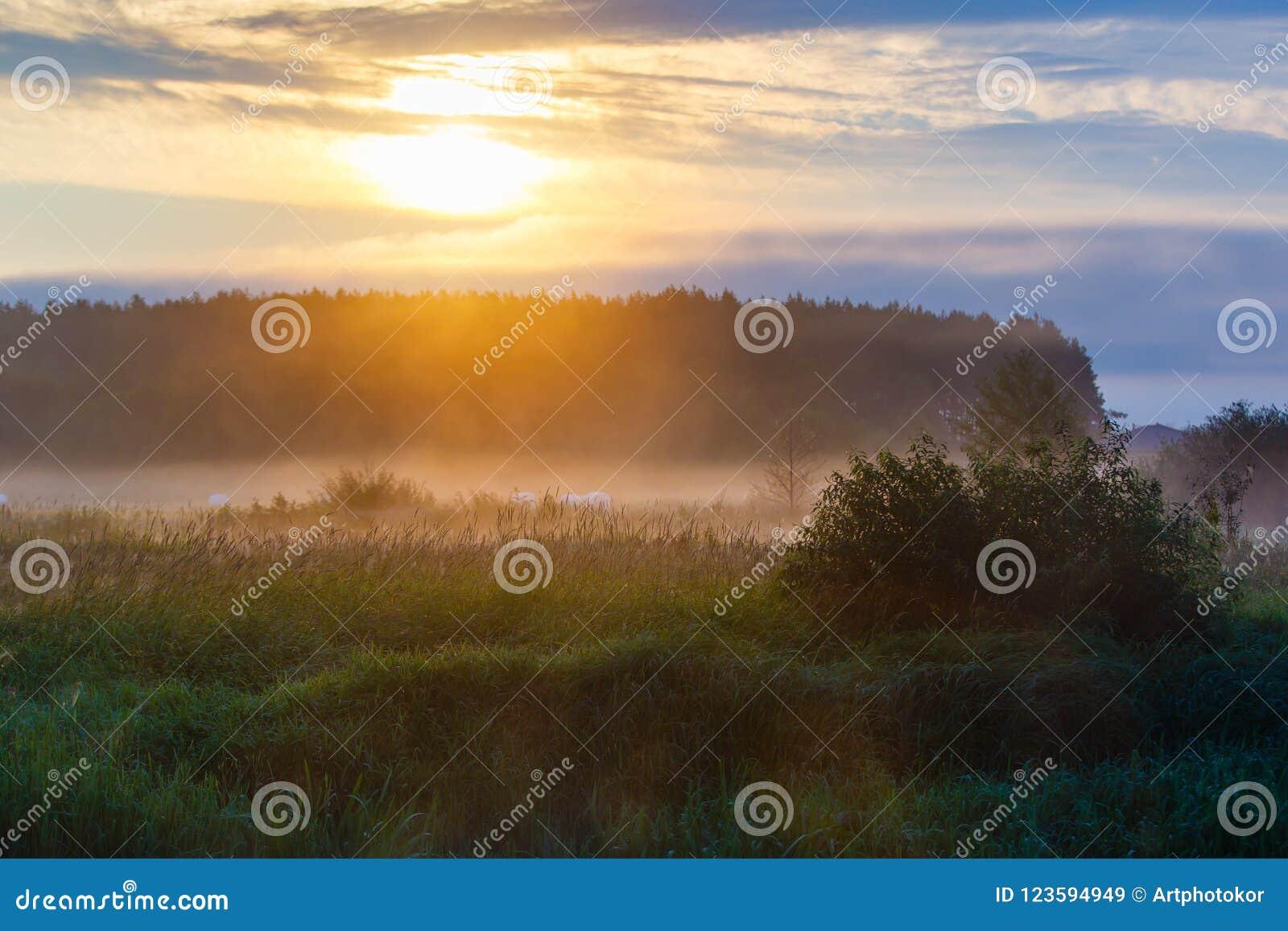 Rayons de soleil coulant par les nuages épais