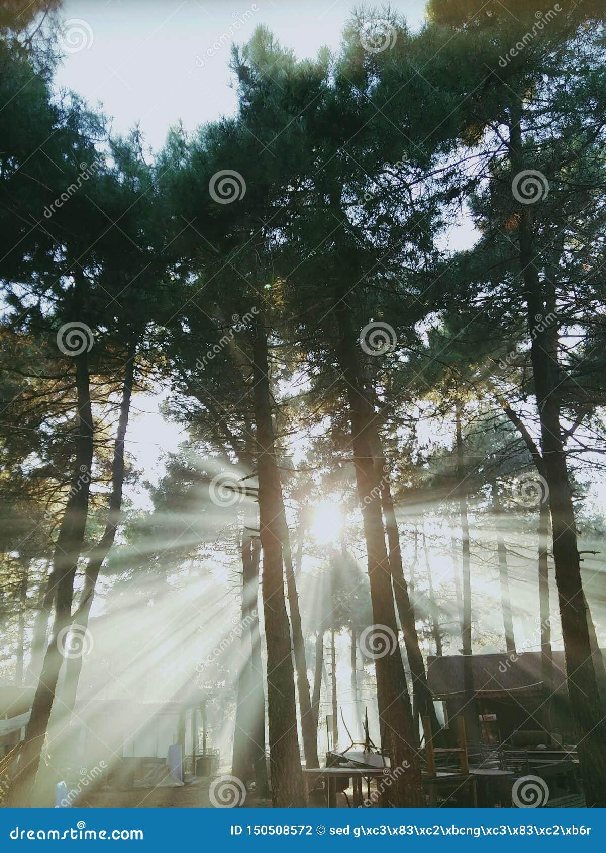 Rayons de soleil dirigés par des bois