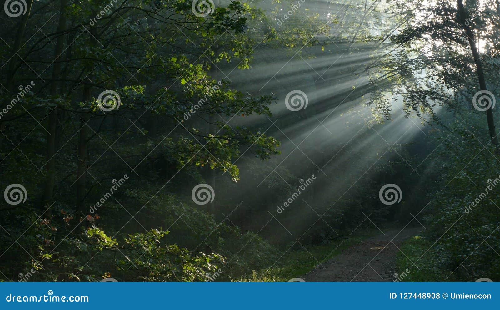 Rayons de Sun au-dessus du chemin Ils brillent pendant le début de la matinée
