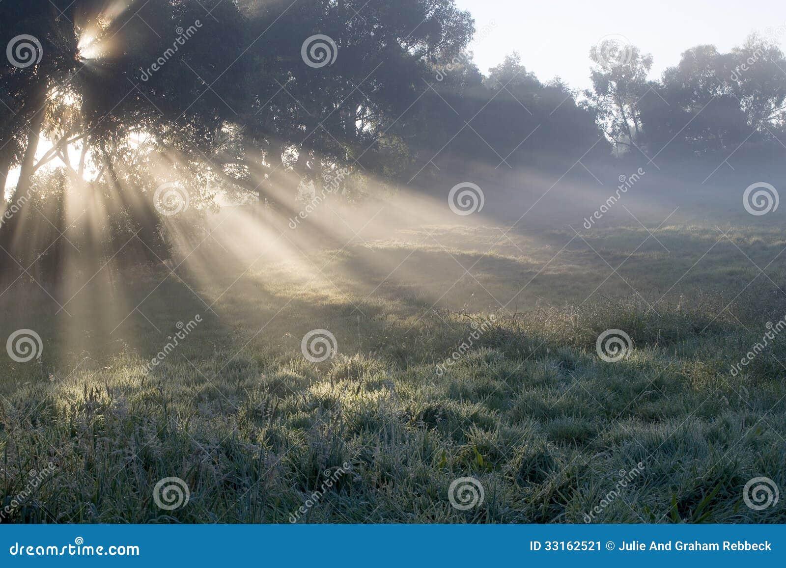 Rayos de la mañana