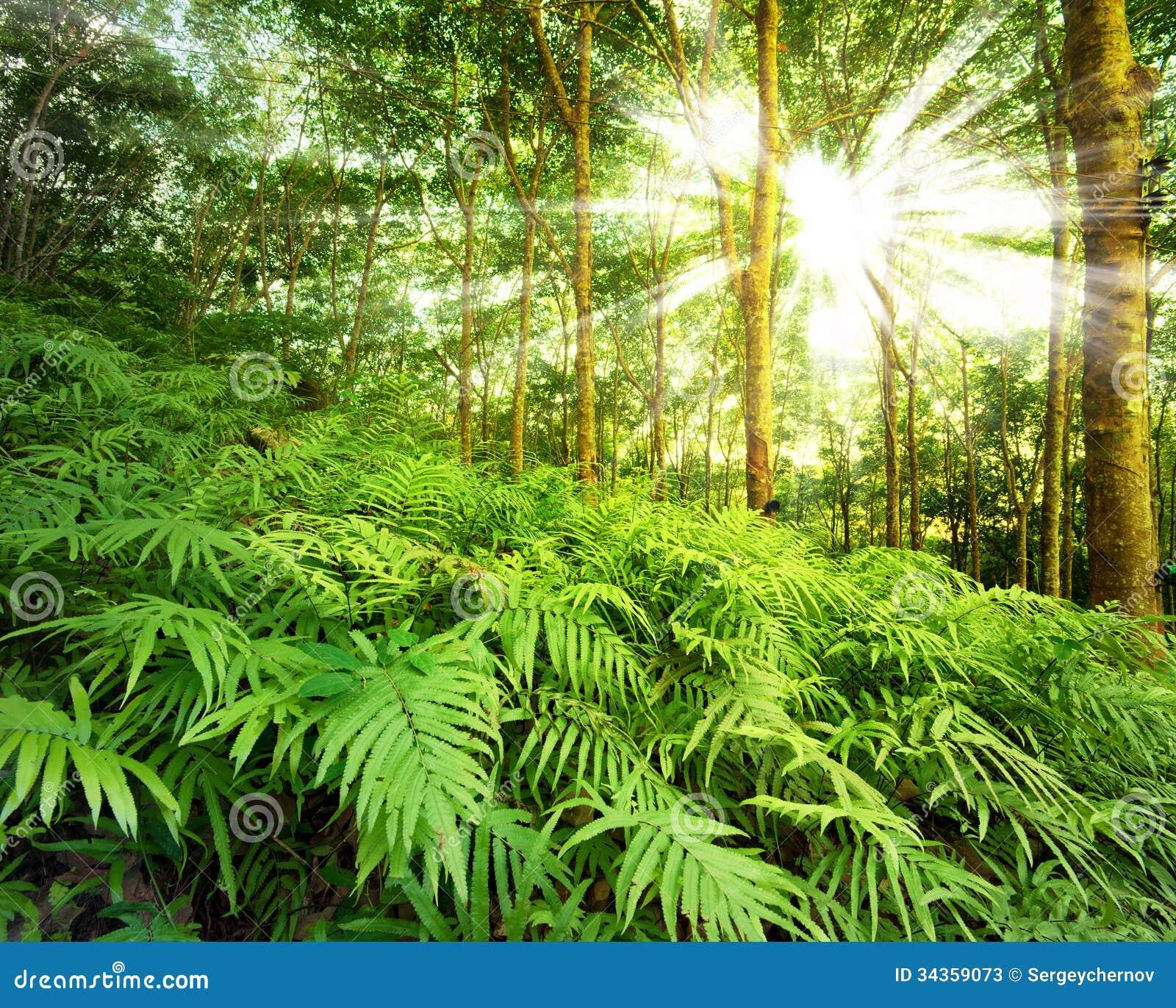 Rayos de Sun en bosque