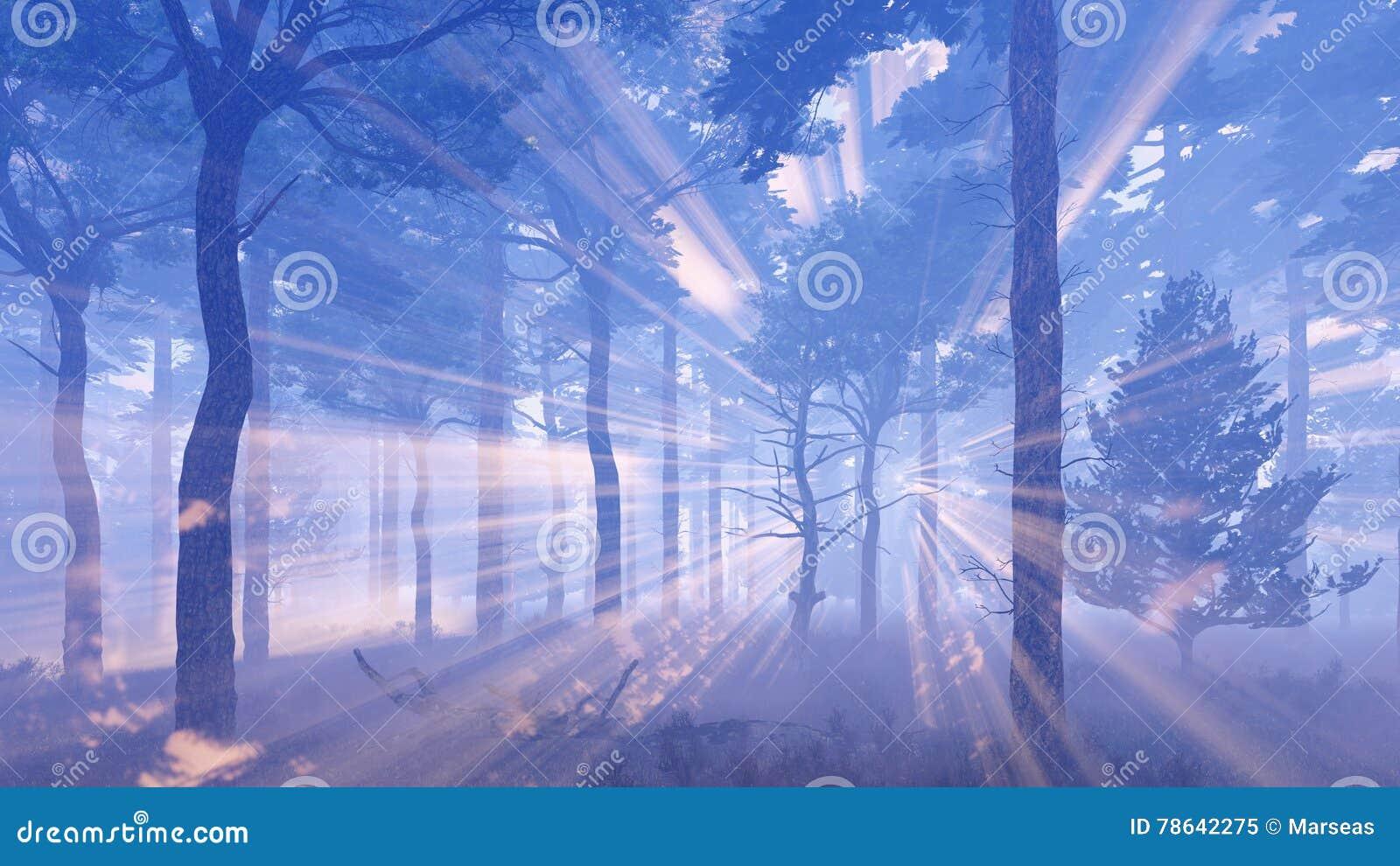 Rayos mágicos del sol en bosque brumoso