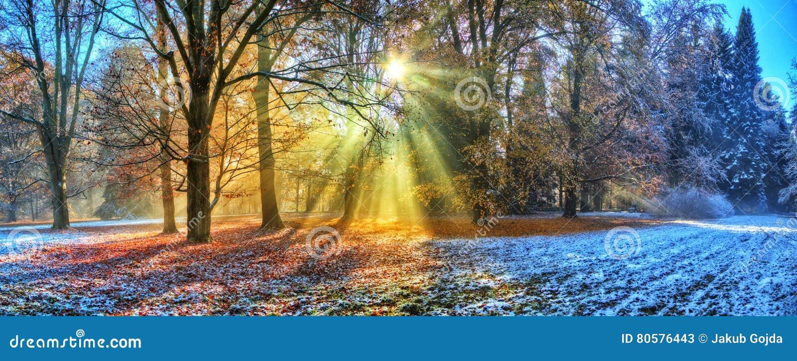 Rayos solares de la mañana en bosque del invierno