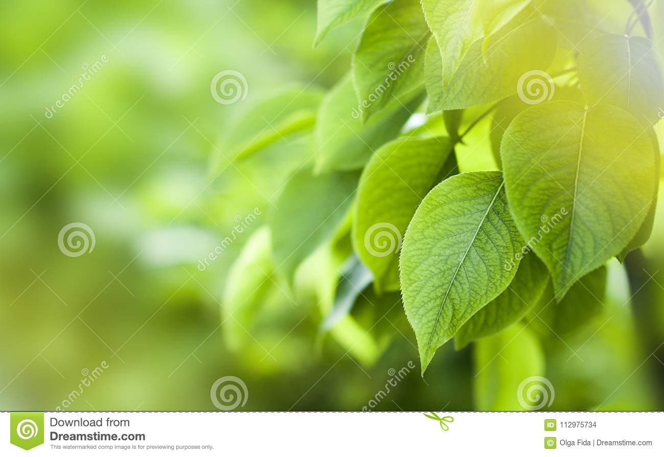 green foliage of the trees