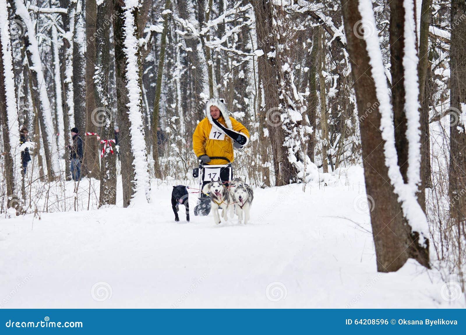 Raza de perro de trineo en Járkov, Ucrania