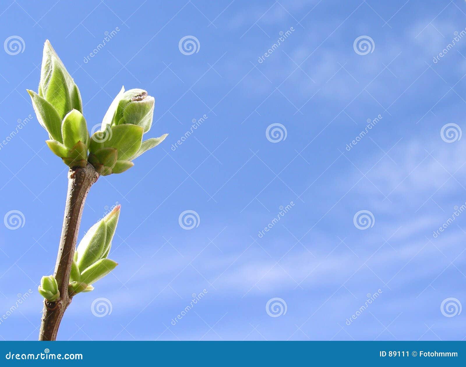 Razem wiosna