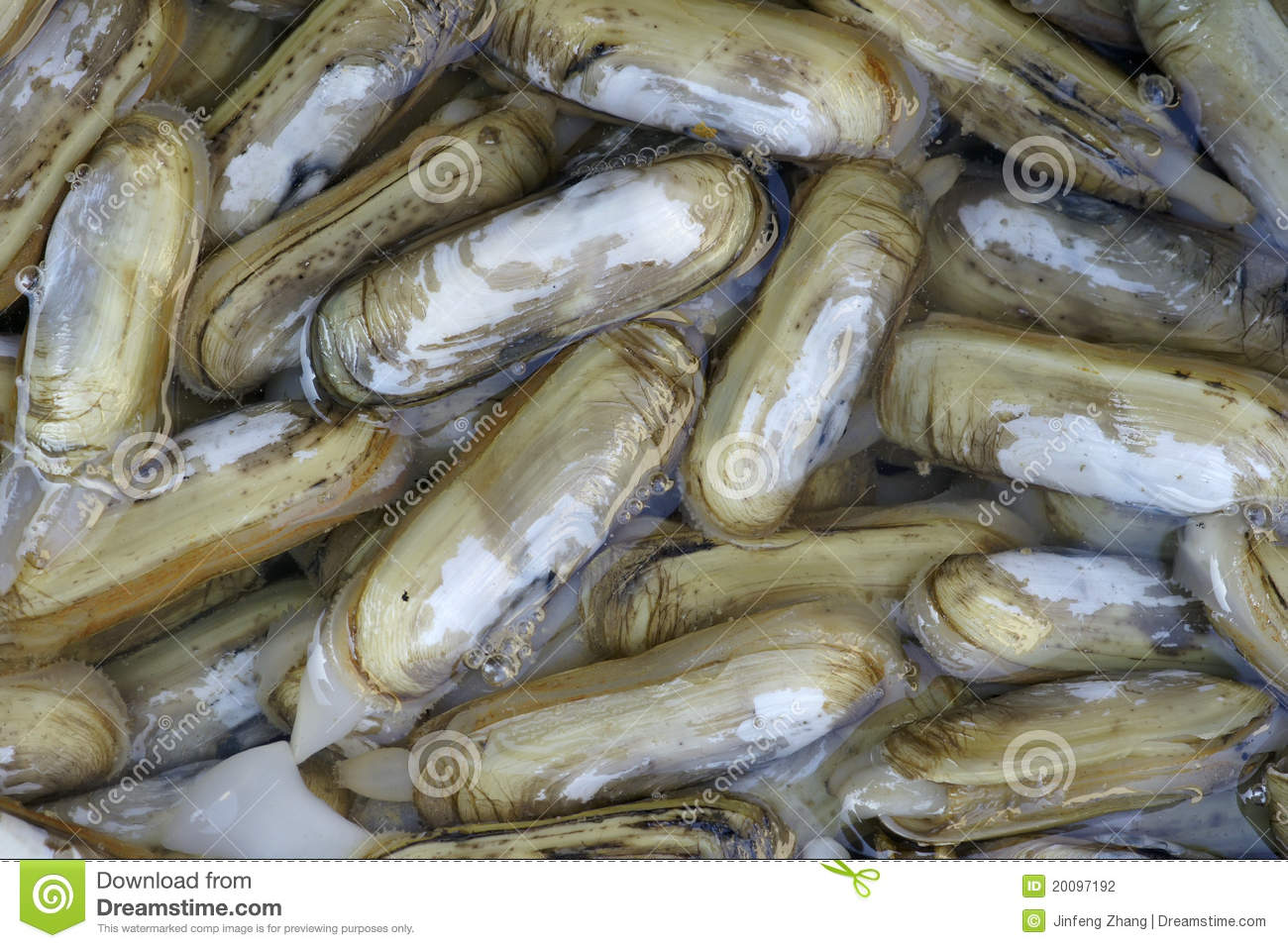 Razor Fish Stock Photography - Image: 20097192