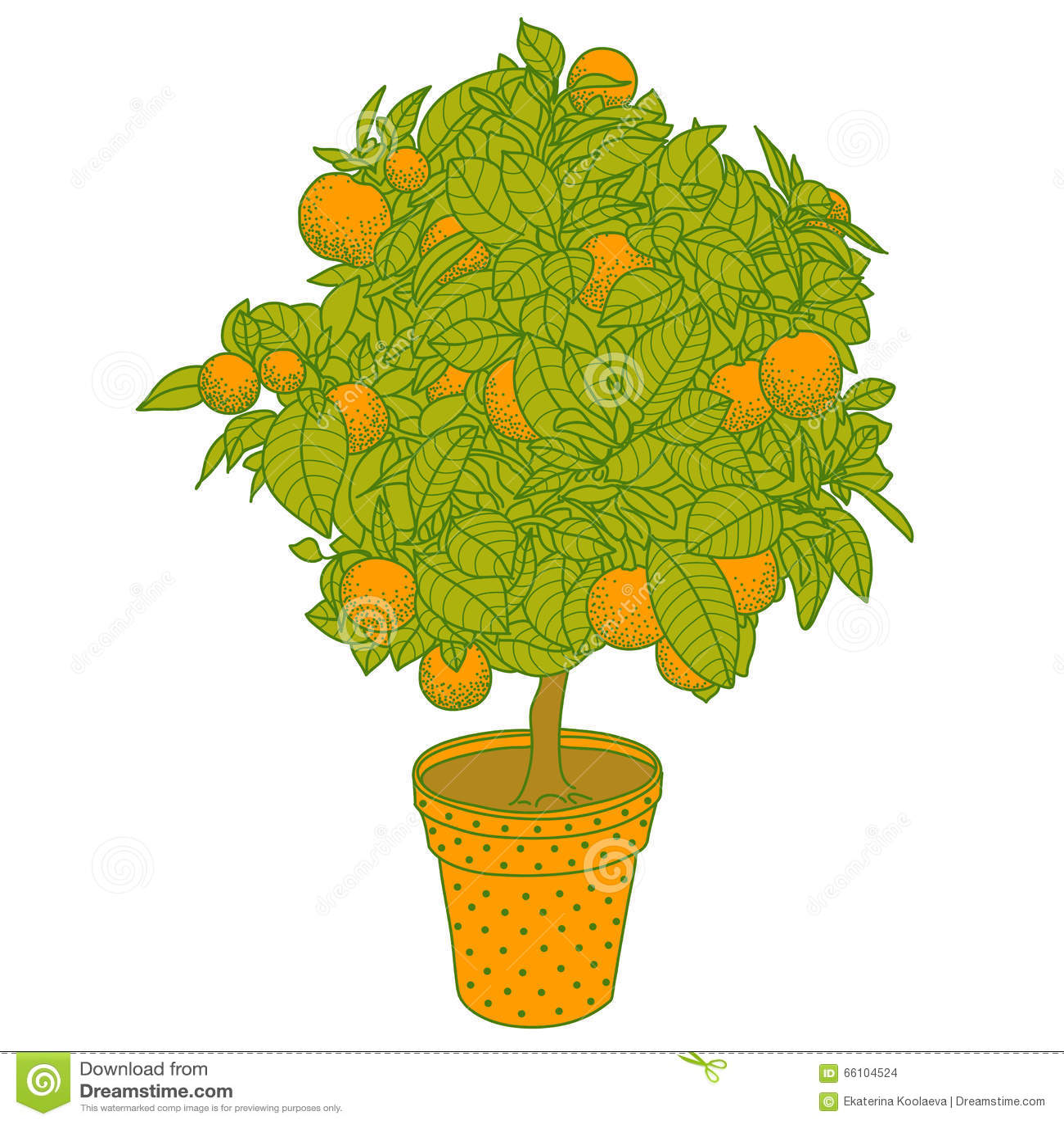 Rbol de fruta c trica de la mandarina de la naranja o - Naranjas del arbol a la mesa ...
