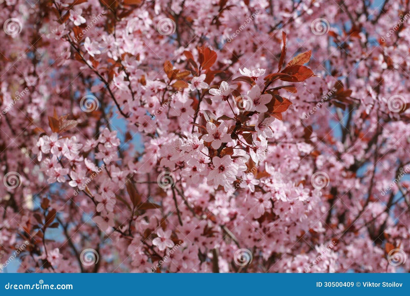 Árbol De La Primavera Imágenes de archivo libres de