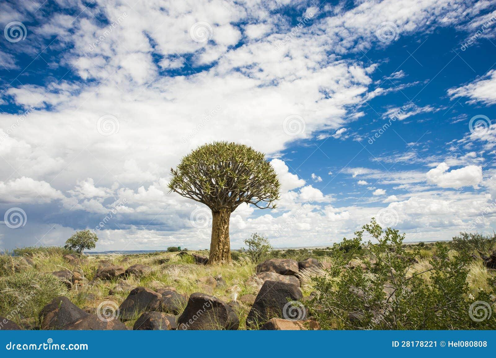 ?rbol del estremecimiento en Namibia