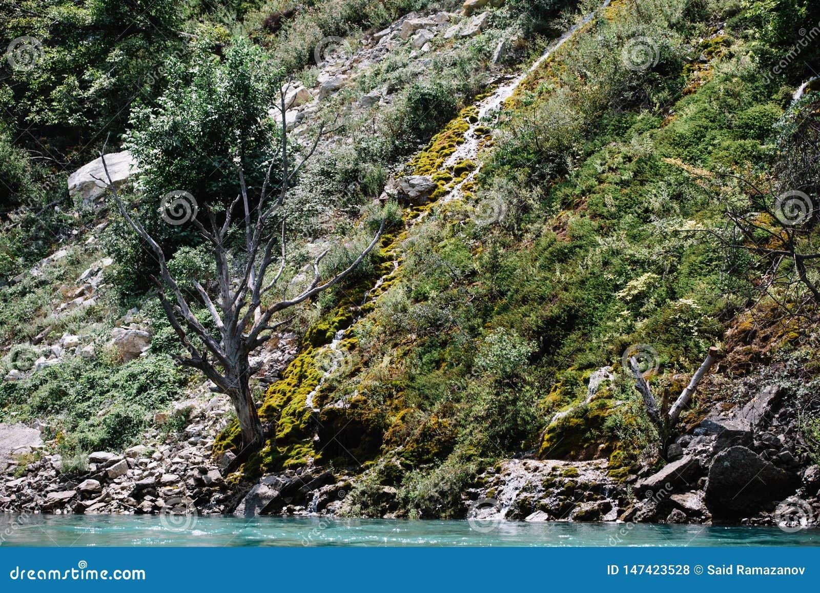 ?rbol secado en una monta?a cubierta con el musgo Barranco de Sulak, Daguest?n