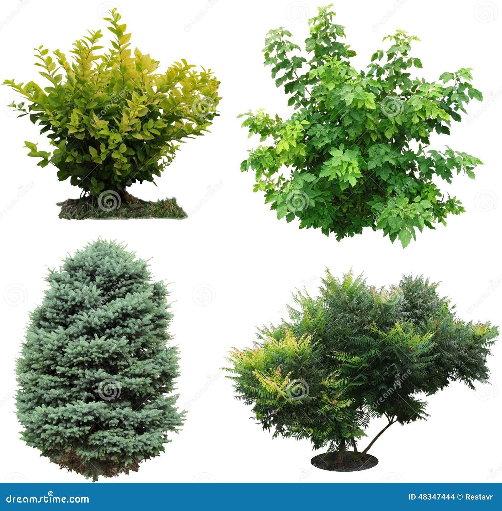 Rboles arbustos izolated foto de archivo imagen 48347444 - Arboles y arbustos ...