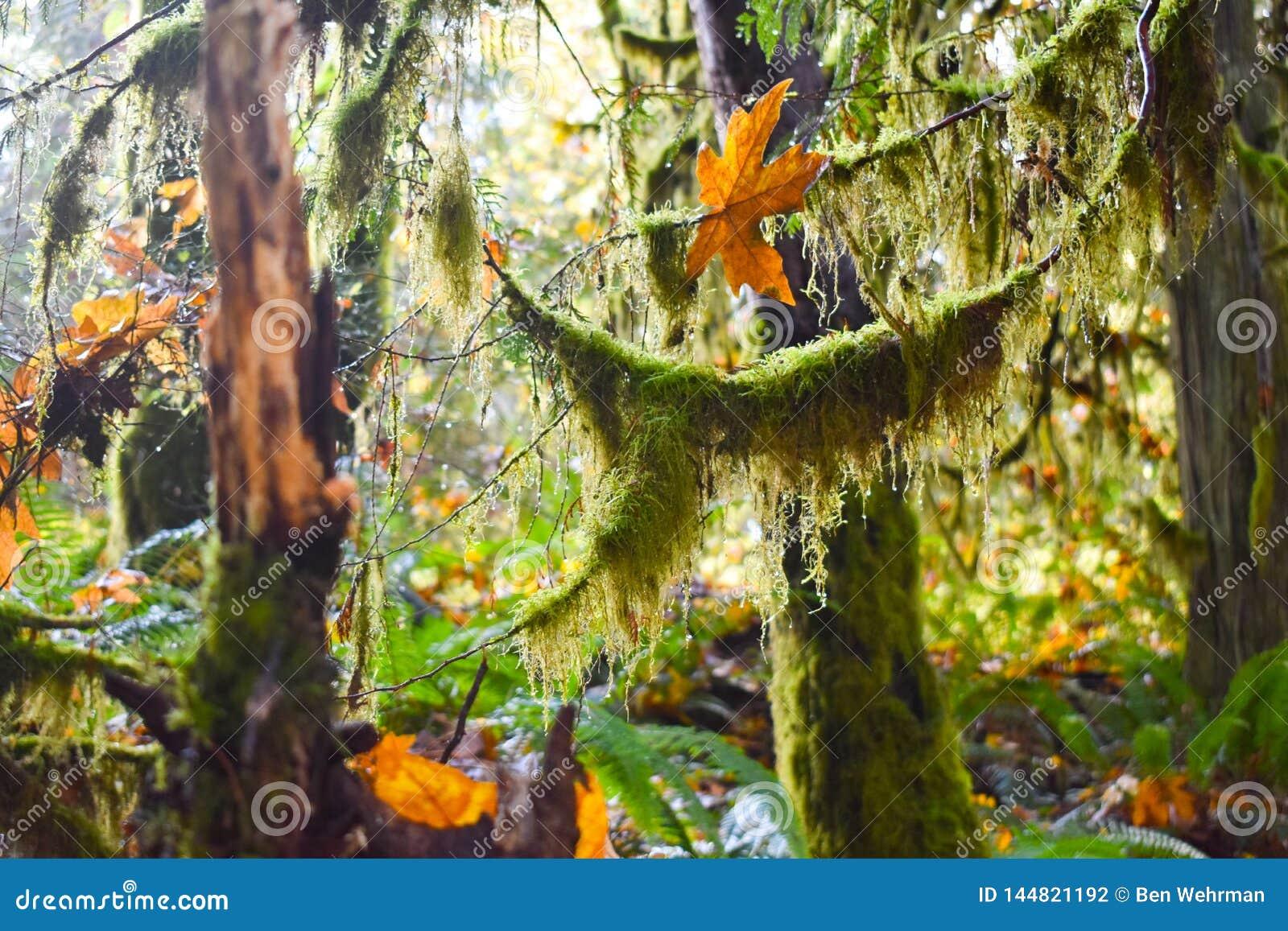 ?rboles cubiertos de musgo en la selva tropical