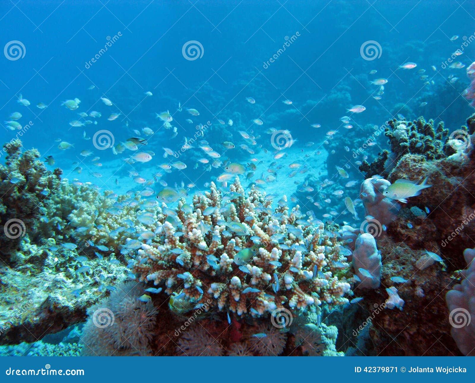 r cif coralien sur le fond de la mer la grande profondeur sur un fond de l 39 eau bleue photo. Black Bedroom Furniture Sets. Home Design Ideas