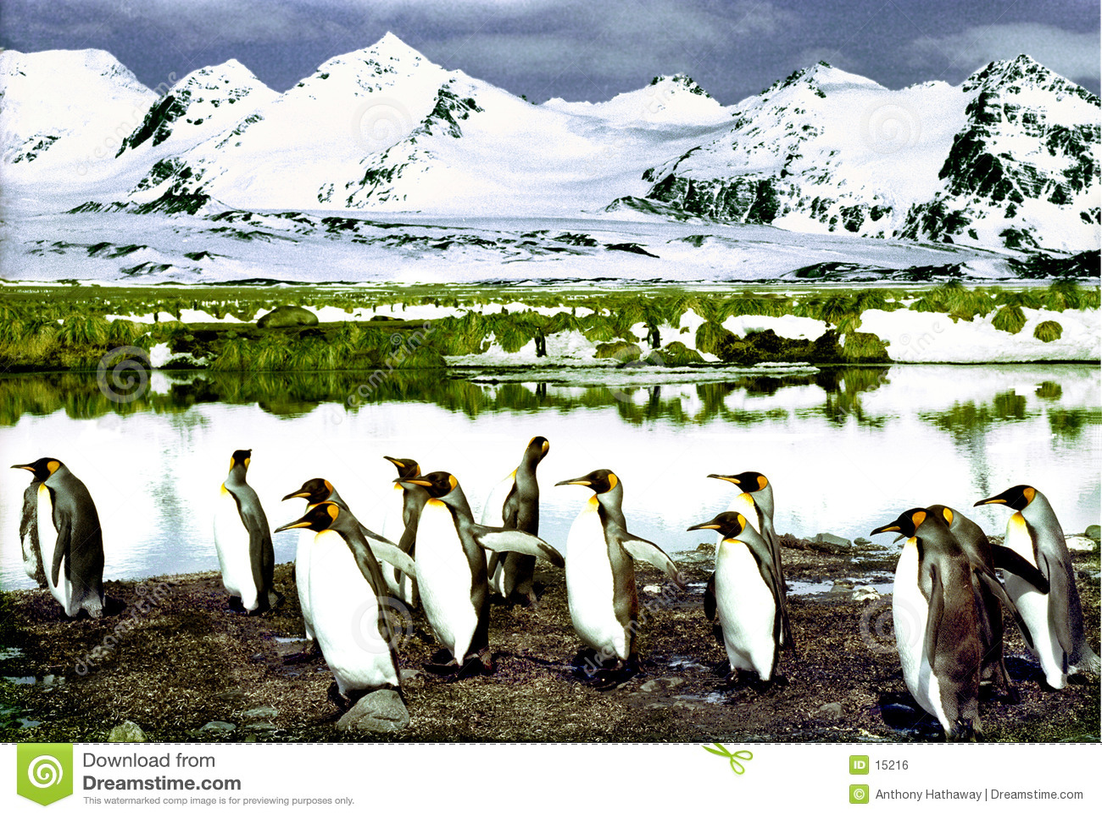 Re Penguins