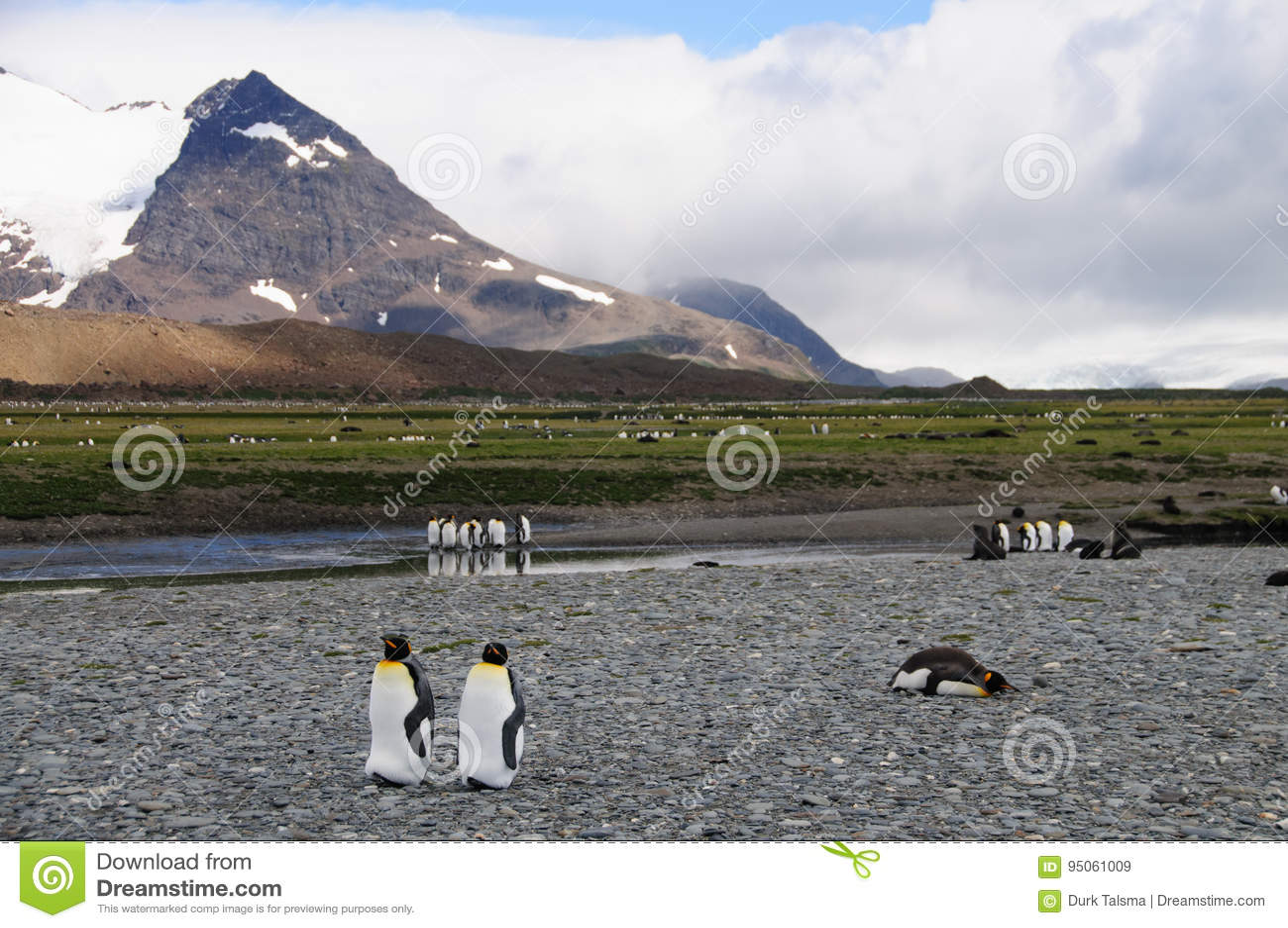 Re Penguins sulle pianure di Salisbury