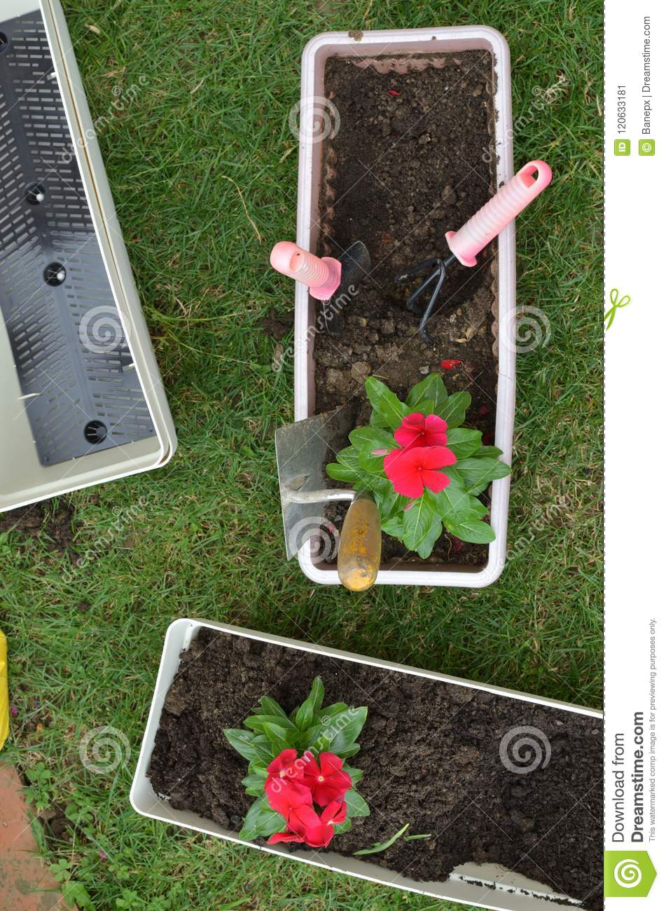 Re potting flowers top view stock image image of flowerbed re potting flowers top view mightylinksfo