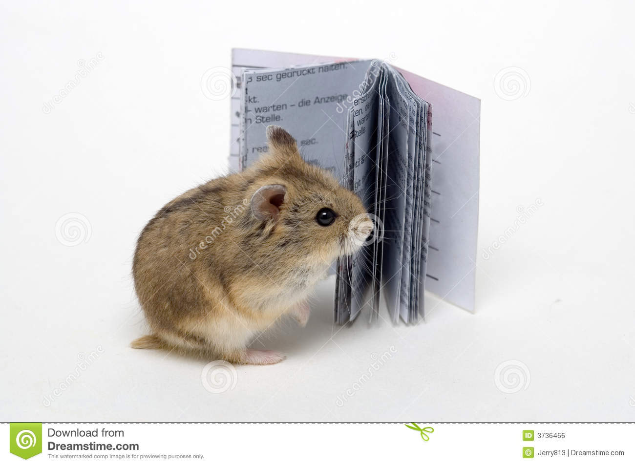 Read The Hamster Royalty Free Stock Image Image 3736466