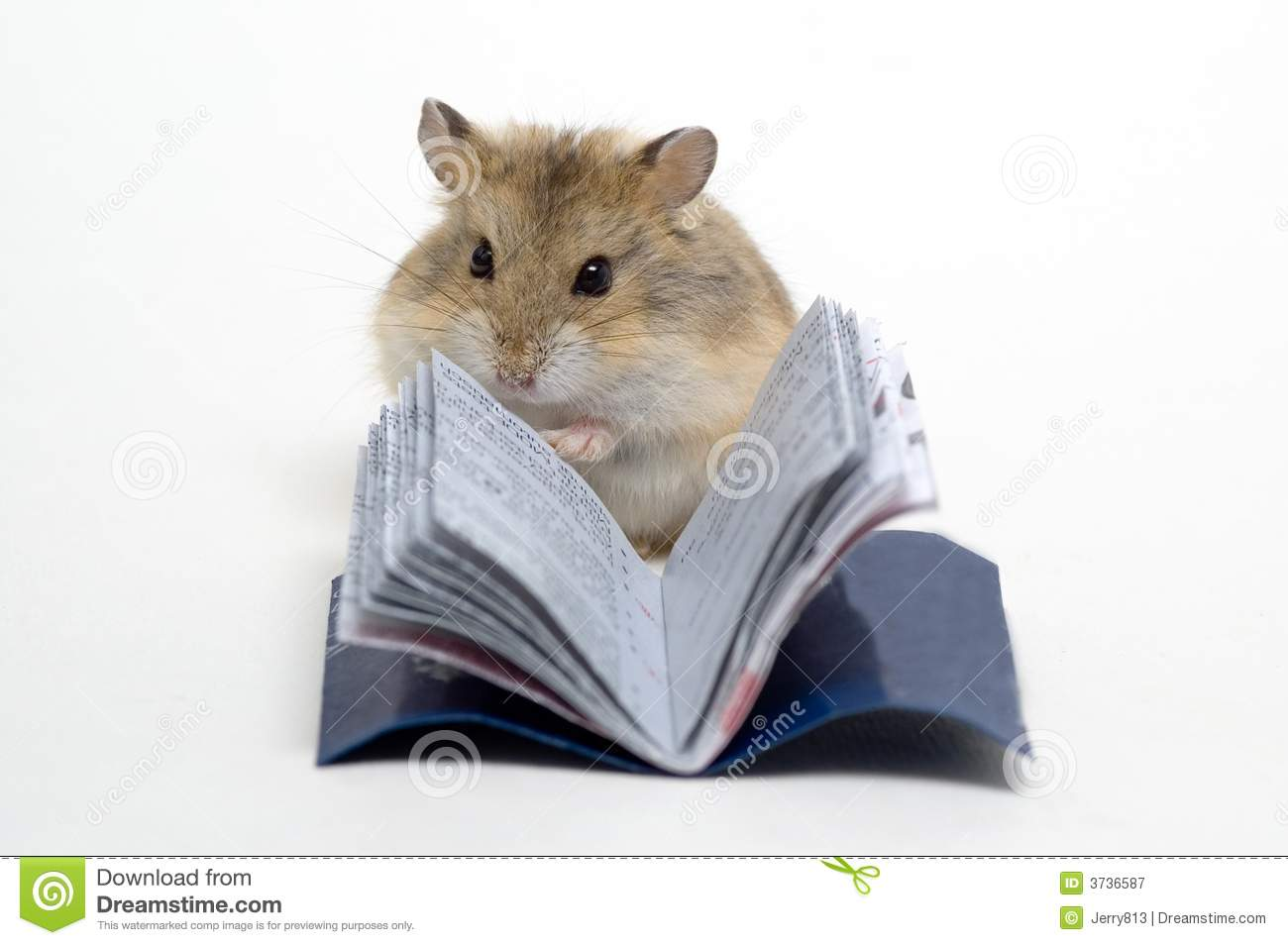 Read The Hamster Royalty Free Stock Photography Image
