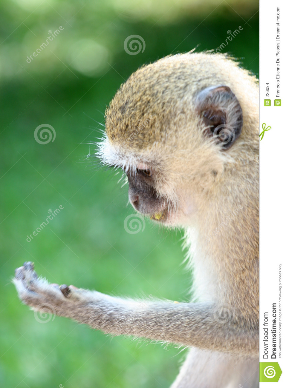 Download Reading Monkey stock photo. Image of reading, tame, palm - 226094