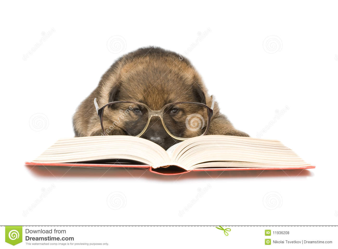 Bookworms: Read These Training Books! |Puppy Reading