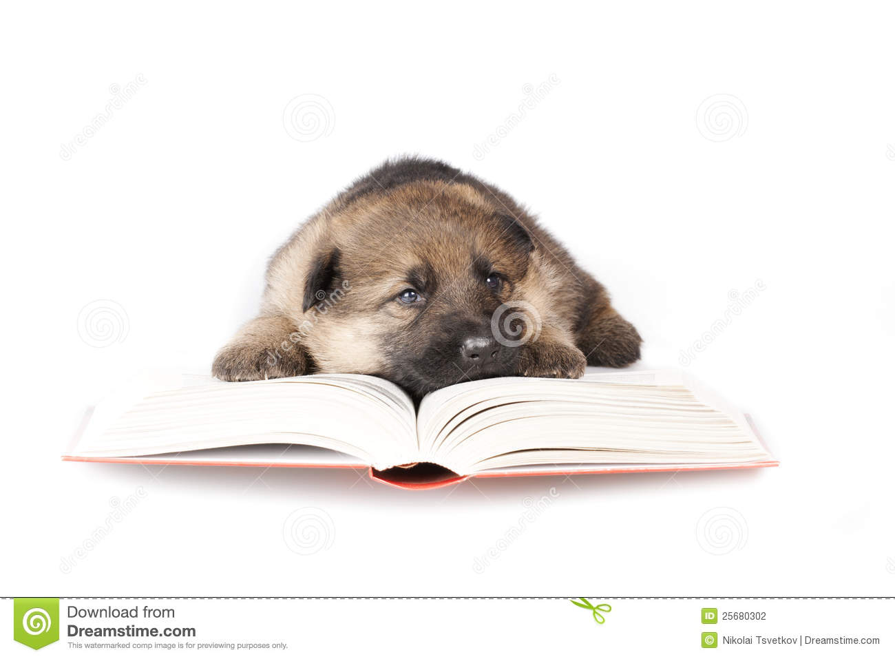 Little puppy reading the book.