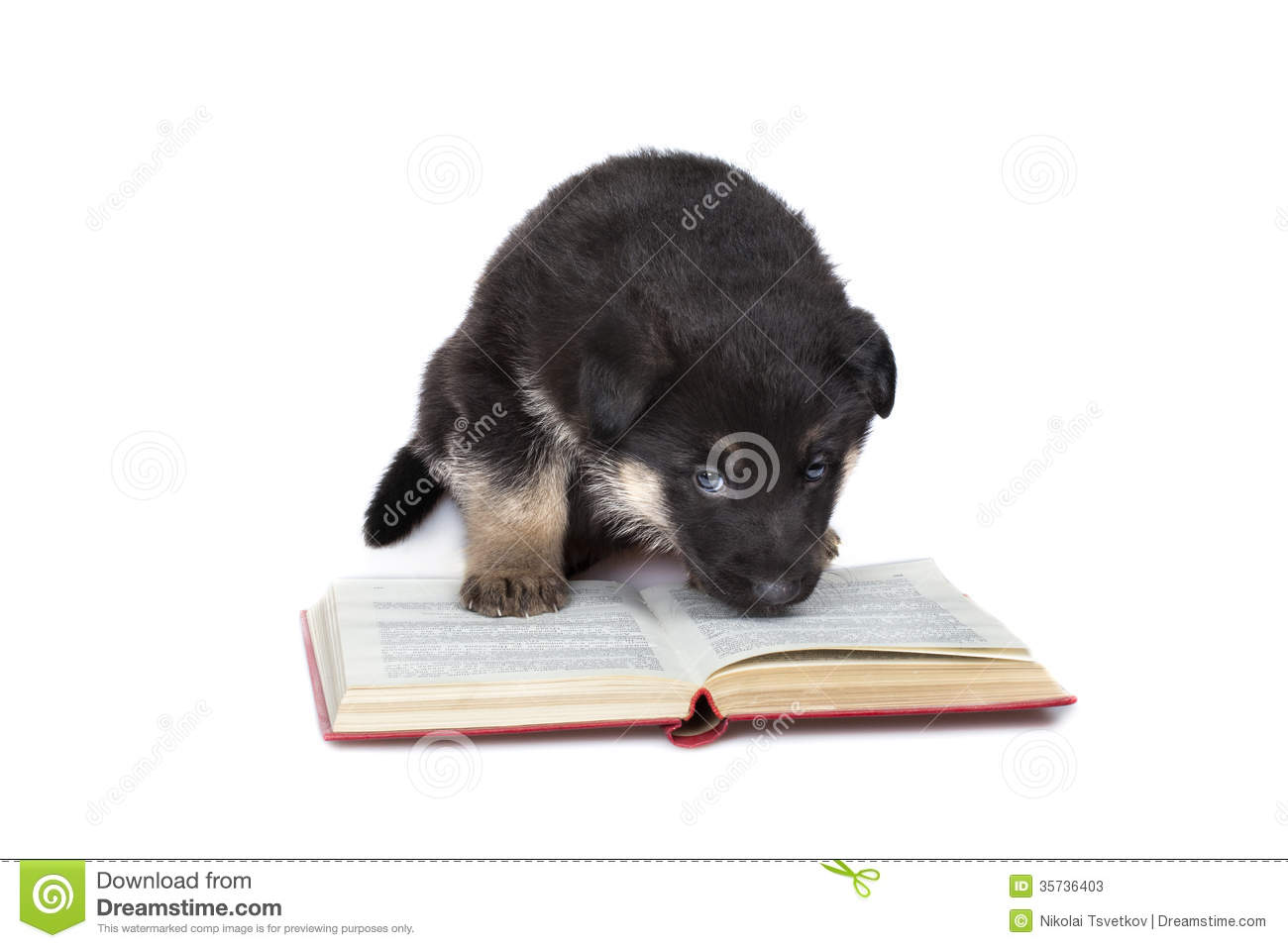 Reading puppy isolated over white background.