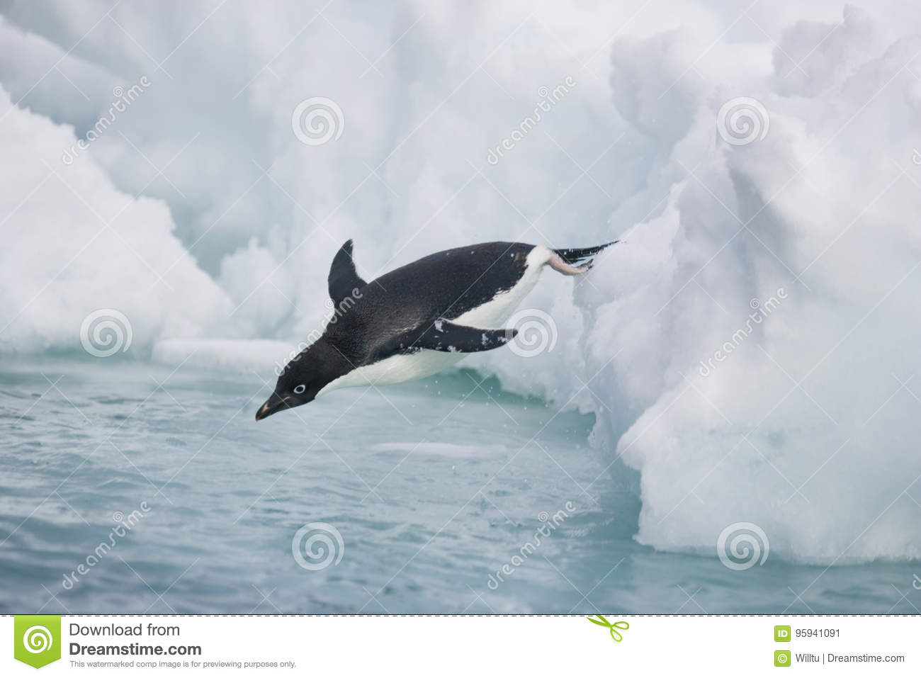 Ready for splashdown, an Adelie penguin goes into the water off Antarctica