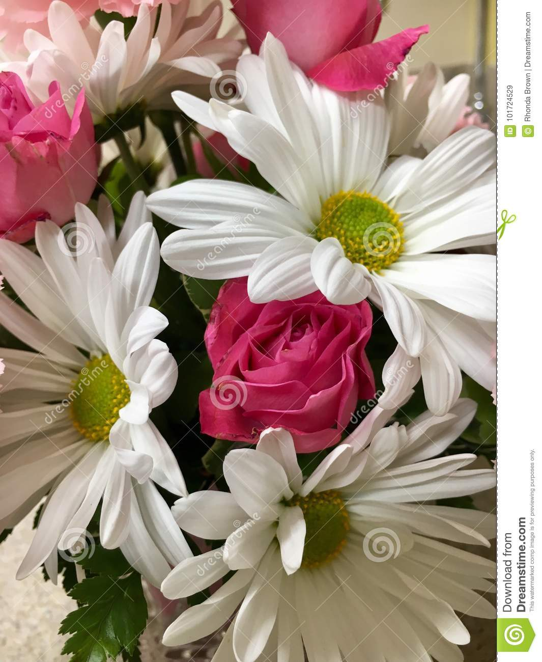 Pink White Flowers Stock Image Image Of Beautiful Real 101724529