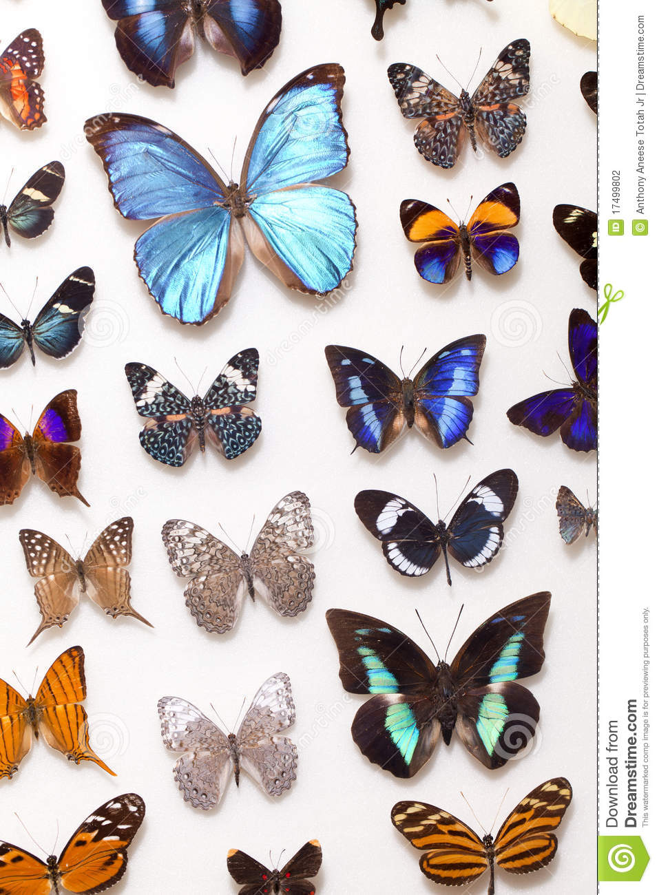 Real Butterfly Collection