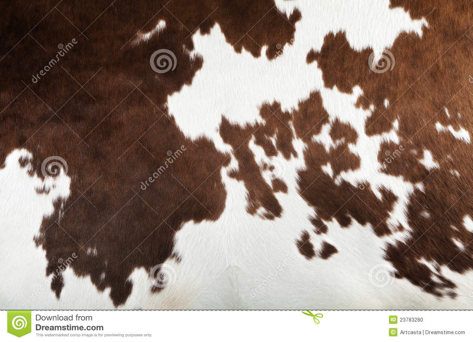 animal print wallpaper border