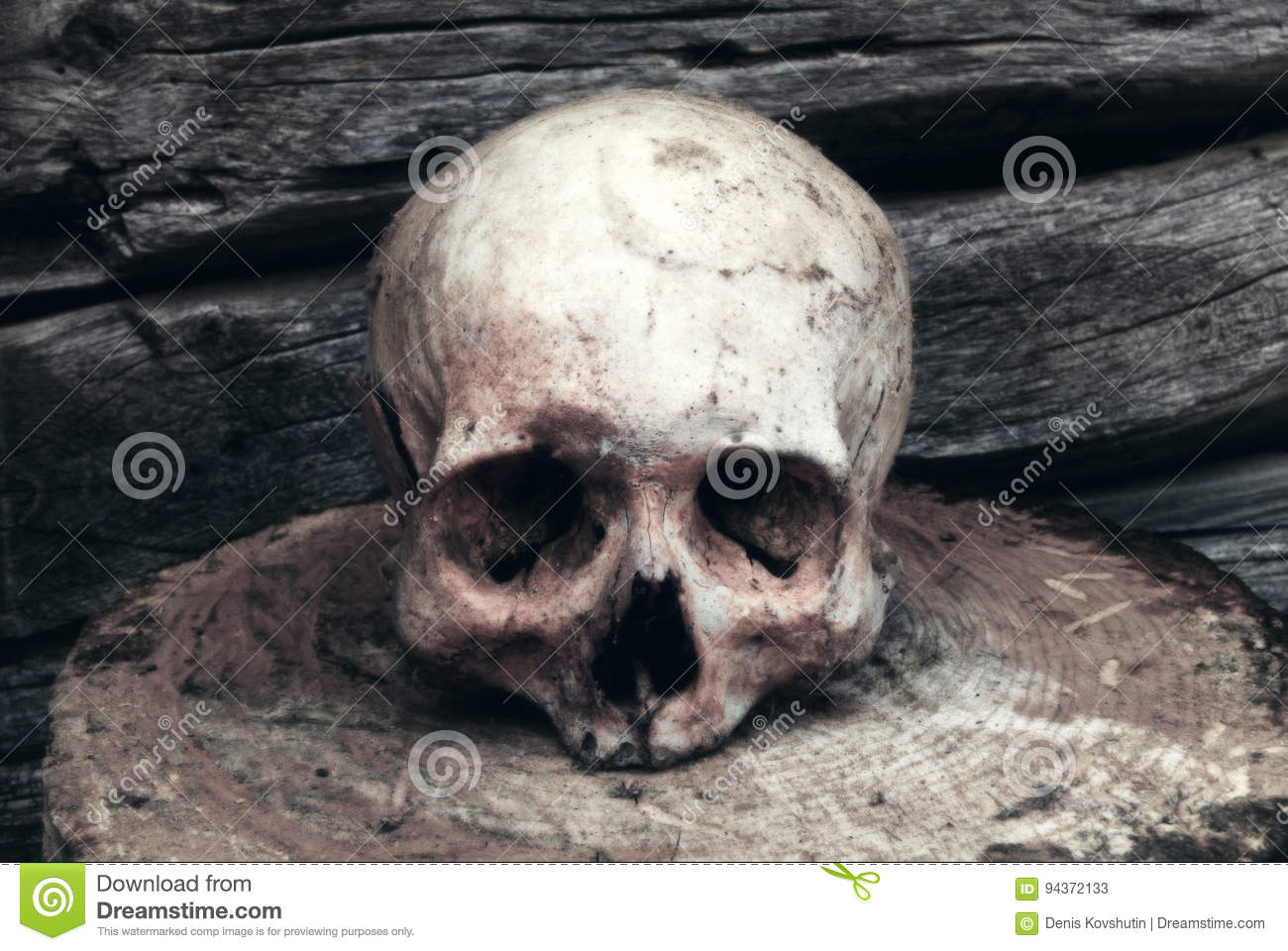 Real Human Skull Stock Images Download 809 Royalty Free