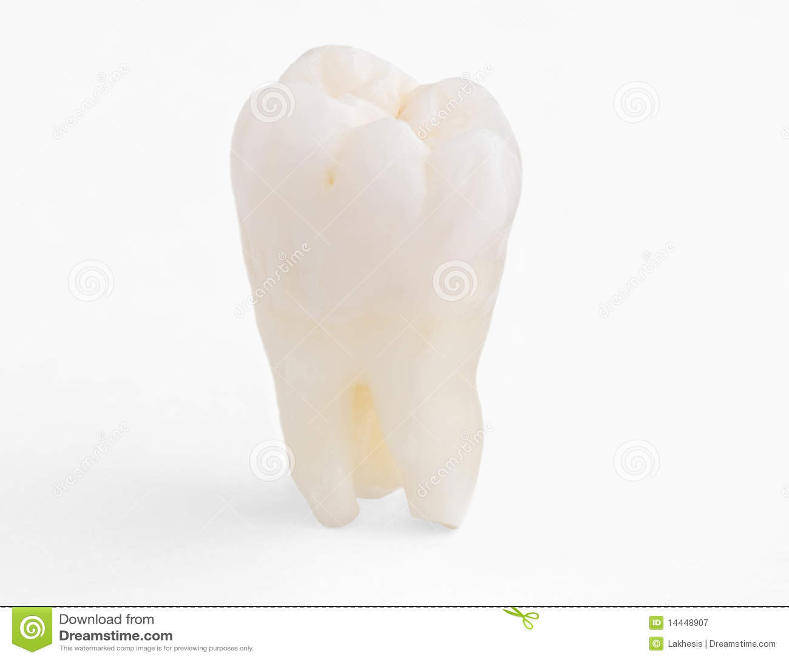 Real human teeth - photo#14
