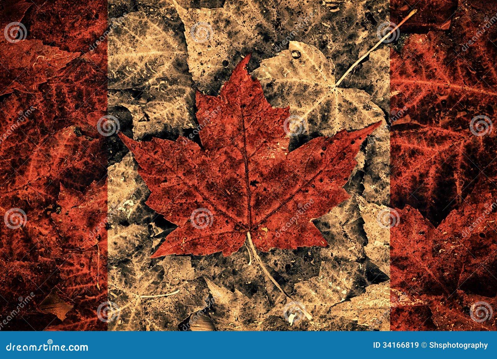 real leaf canada flag stock illustration  image of grunge
