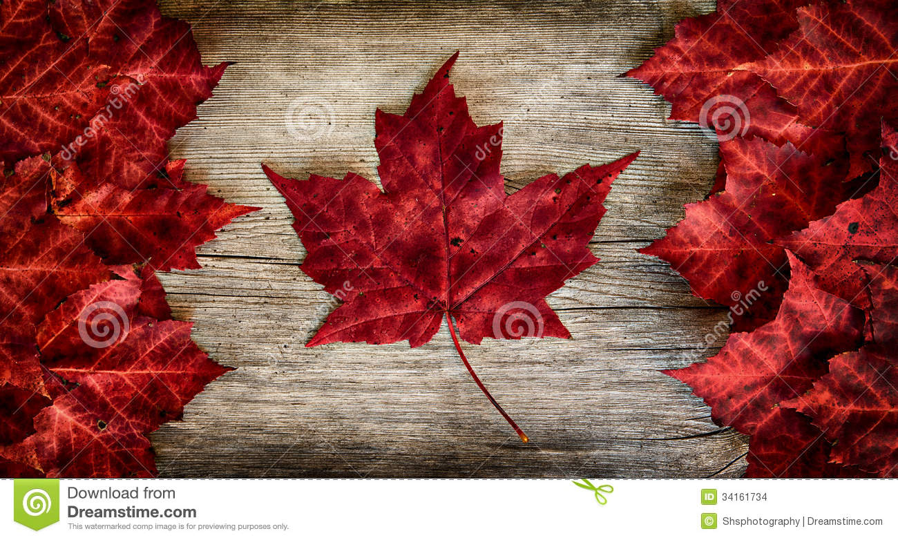 real leaf canada flag on weathered cedar stock images image