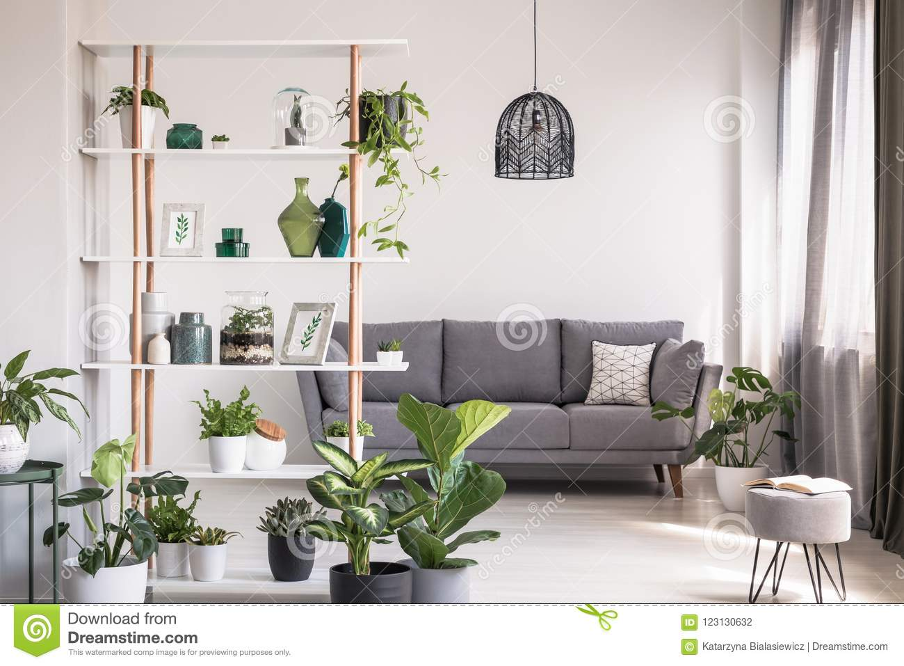 real photo modern living room interior shelf decorations plants grey sofa background concept