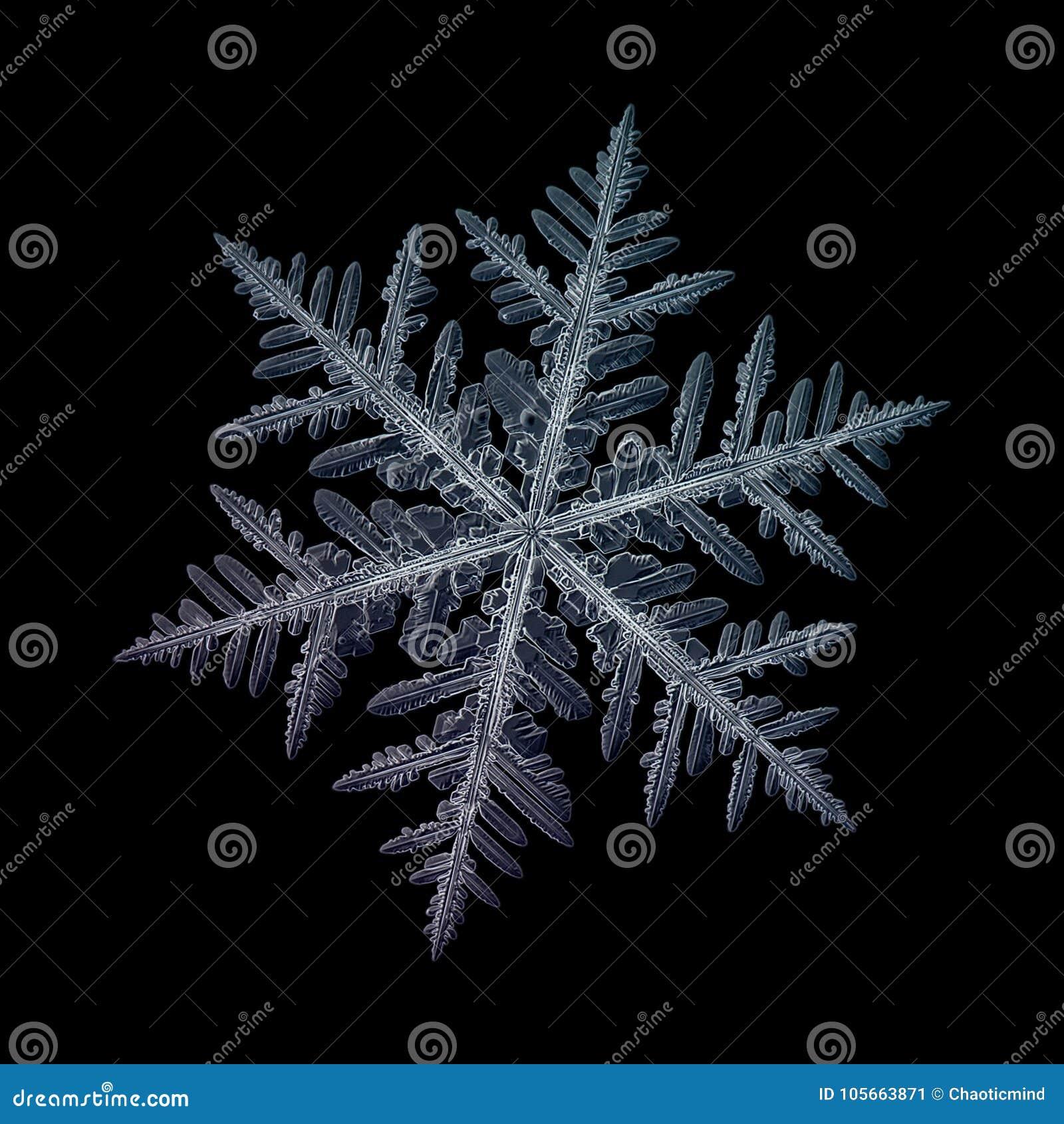 Perfect snowflake - cold winter season |Real Snowflakes Background
