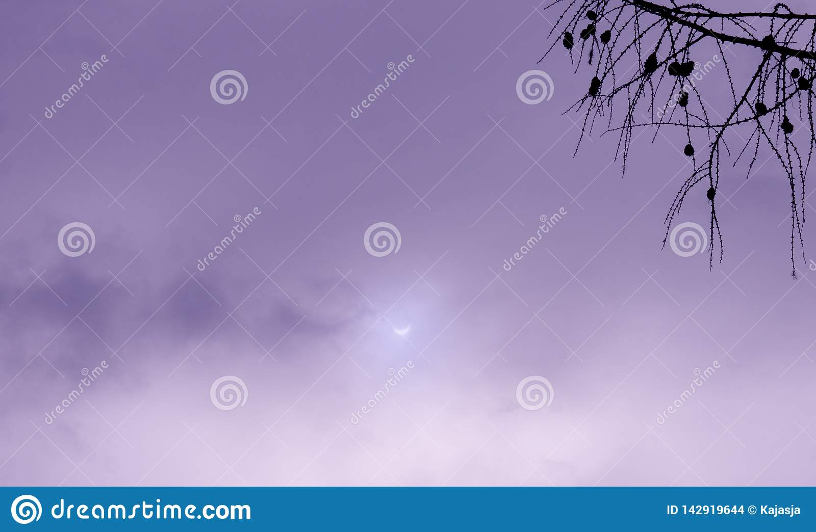 Real Solar Eclipse violet photo sky with branch