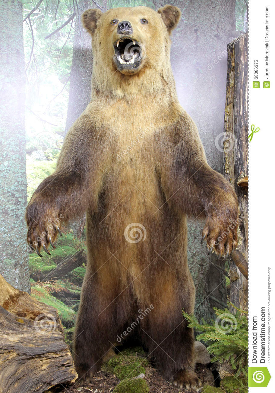 Real Stuffed Brown Bear Royalty Free Stock Photo - Image: 38386375