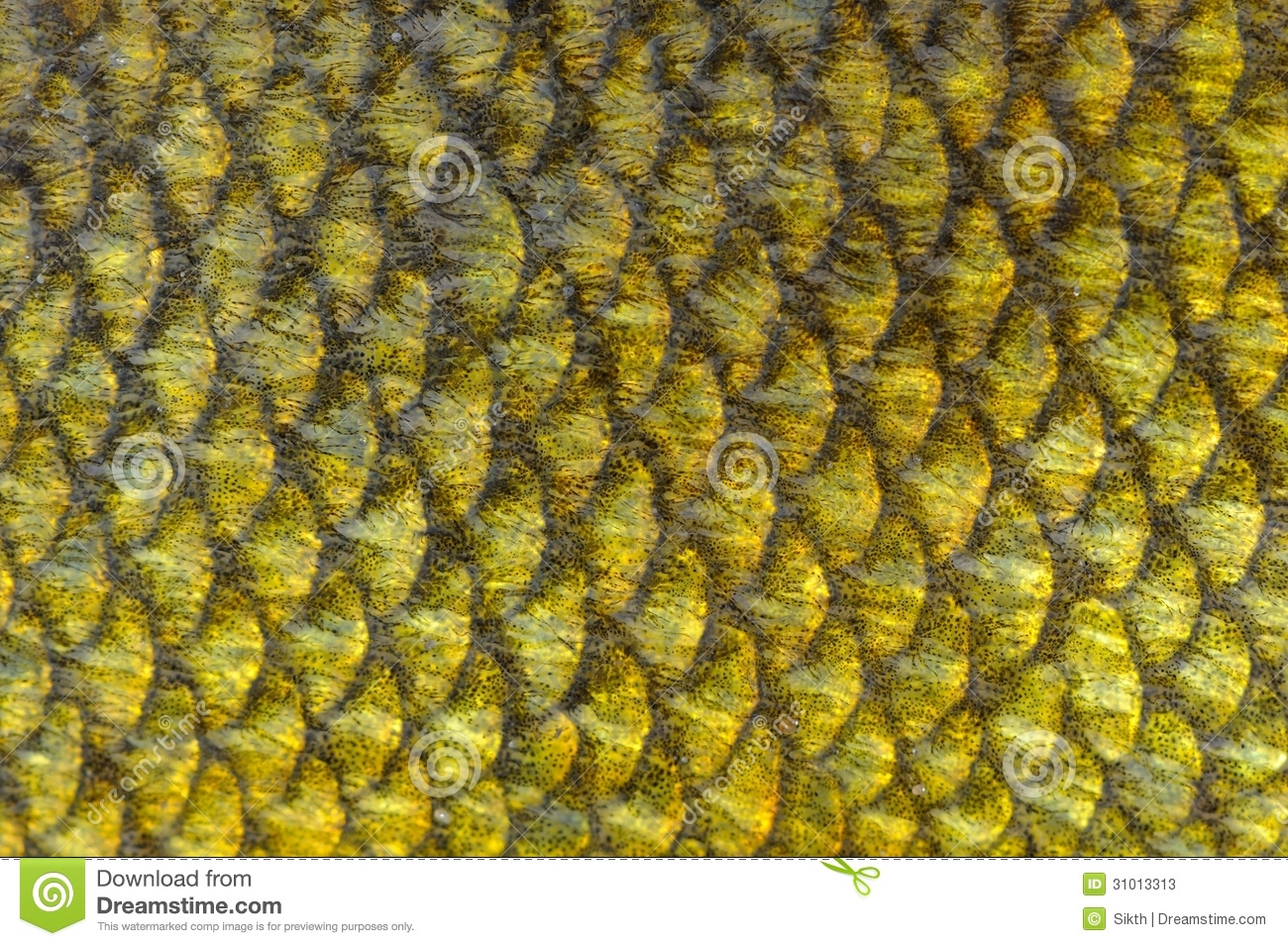Real tench fish scales background stock photos image for Do all fish have scales