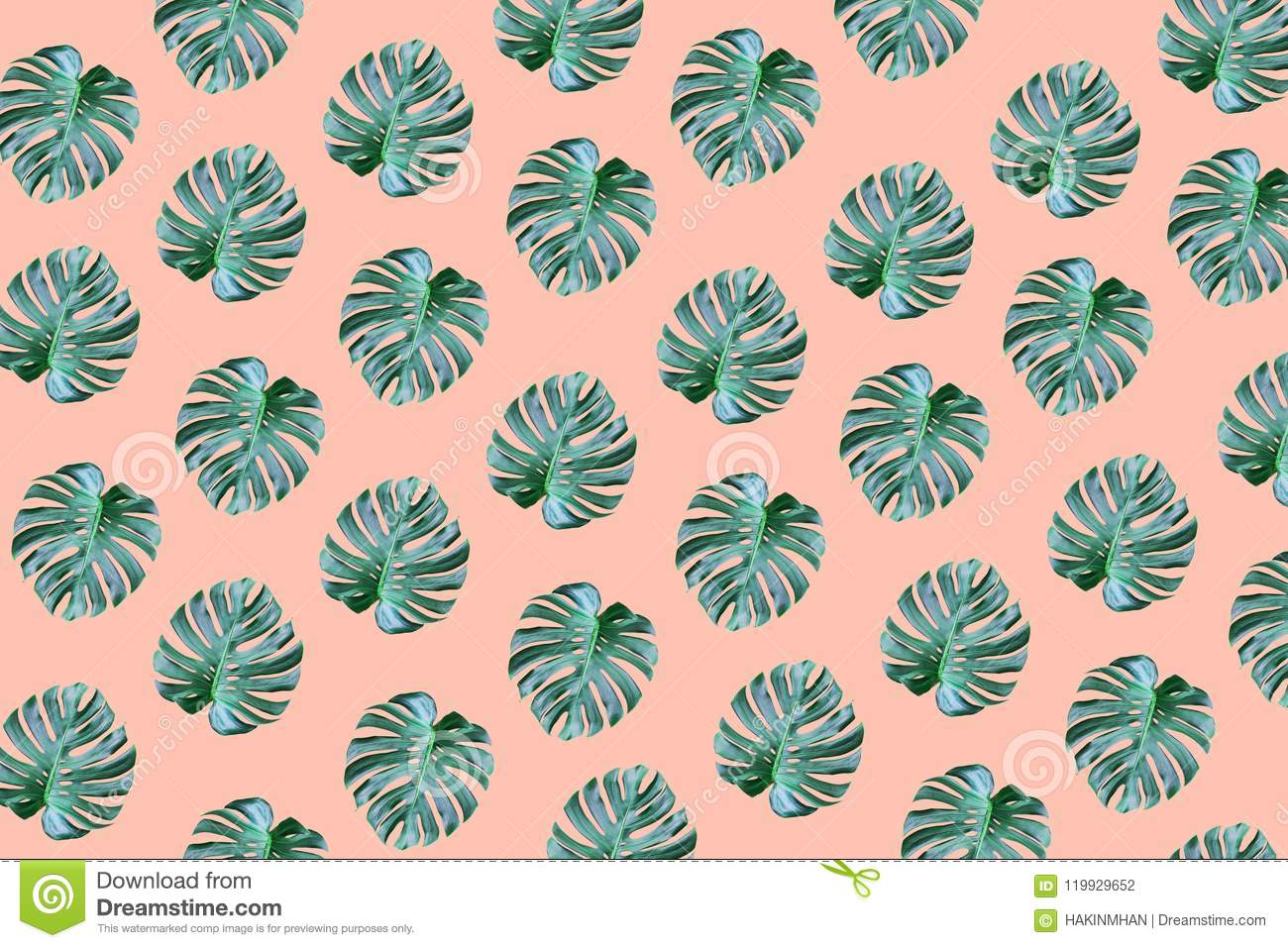Real tropical monstera leaves pattern design on pastel color