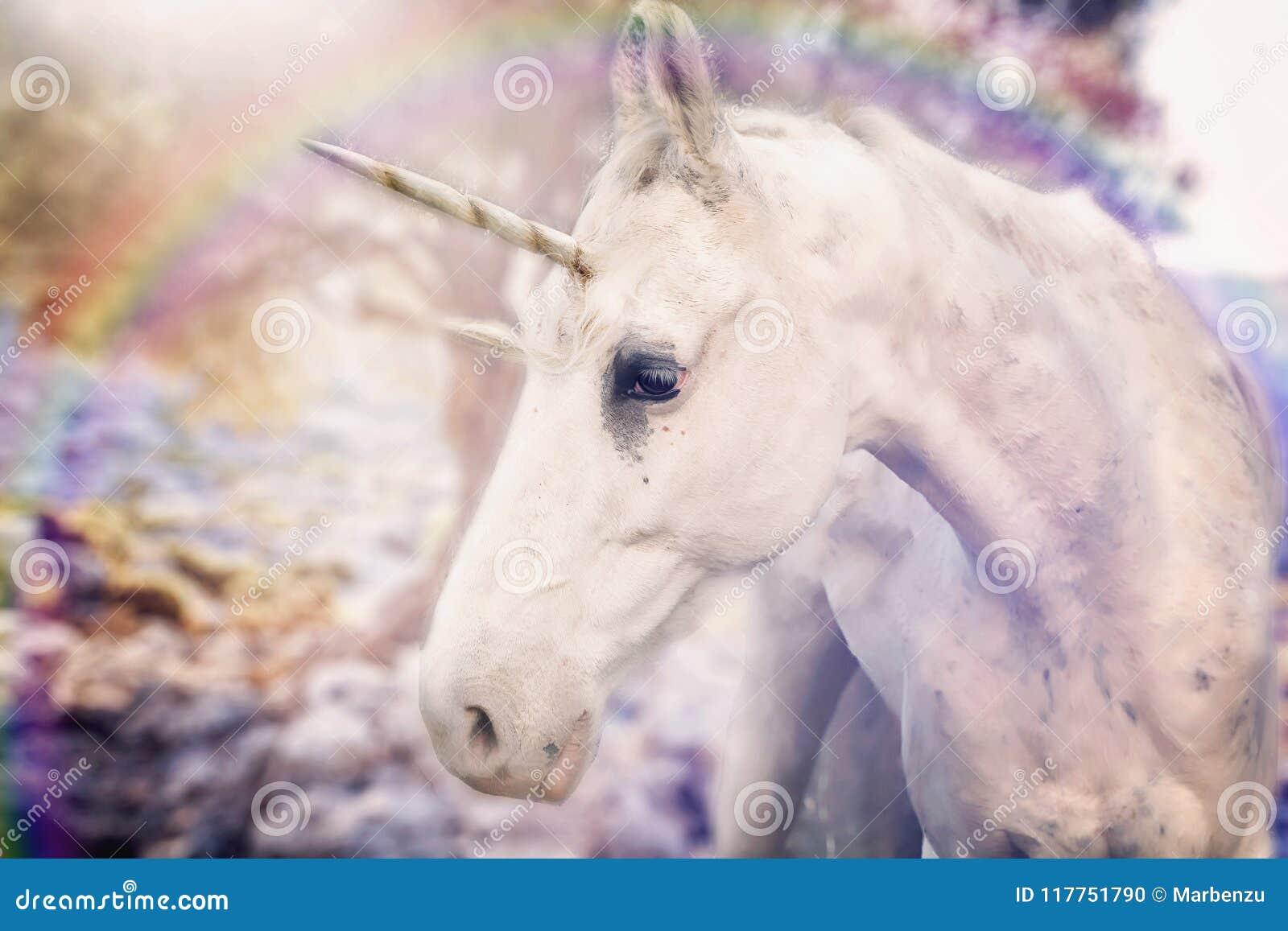 Real Unicorn White Horned Stock Photo Image Of White 117751790