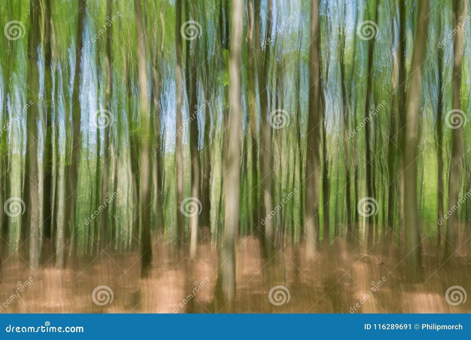 Realidad no vista: Vista borrosa de los árboles de haya jovenes en primavera