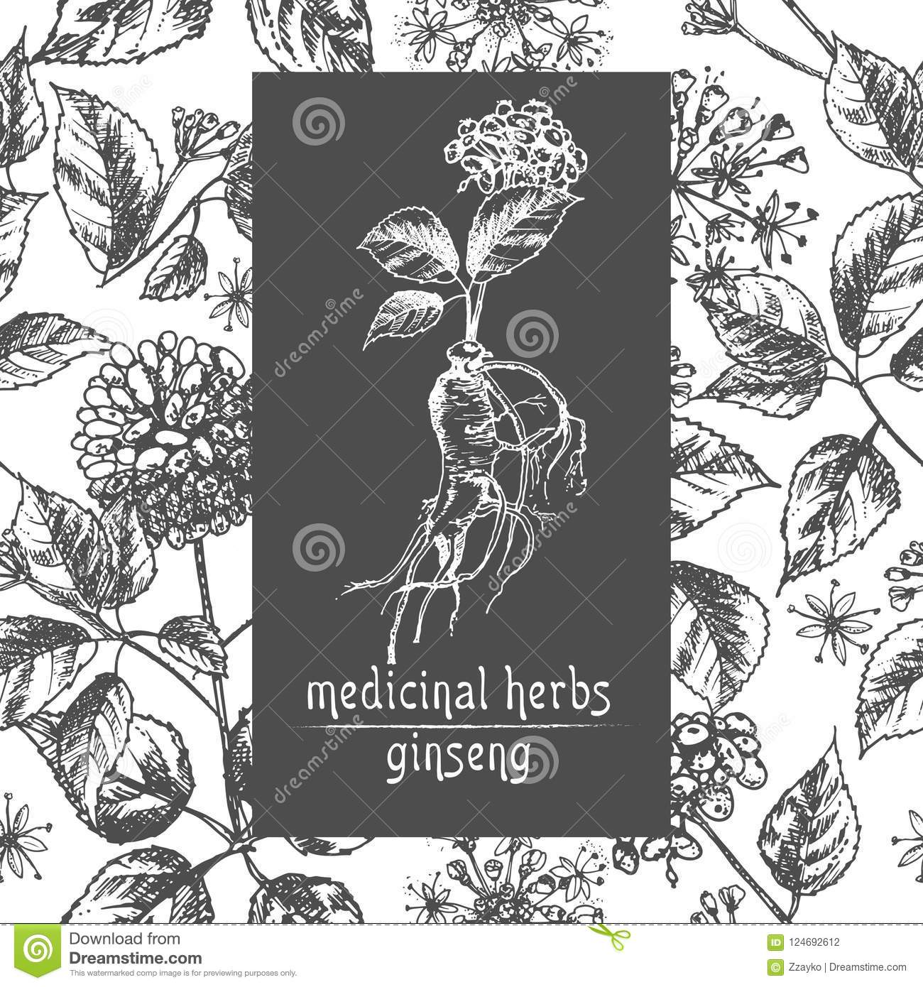 Realistic Botanical Ink Sketch Of Ginseng Root Flowers And Berries