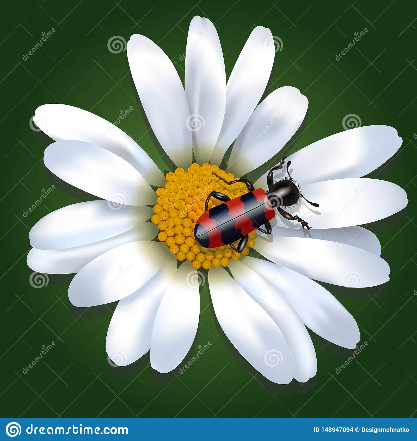 Red and black beetle on a daisy flower