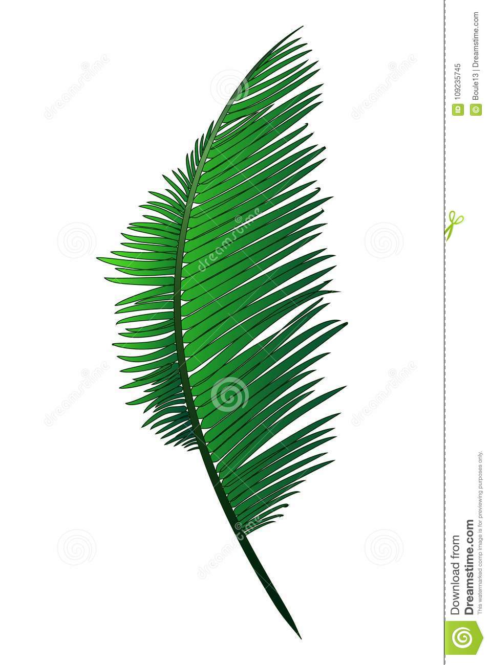 Realistic green branch of tropical coconut palm